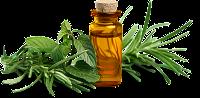 Kräuteröl selber machen – Tipps & Tricks für die Herstellung